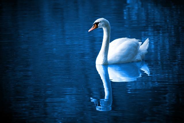 Canard sur la rivière